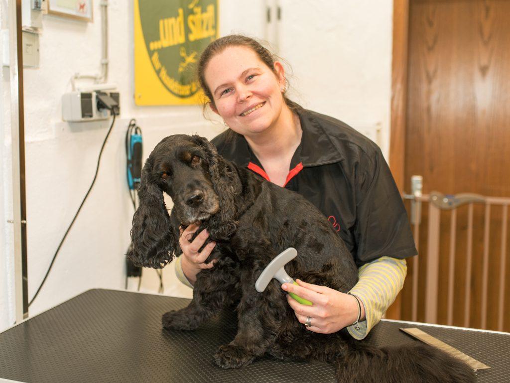 Fellpflege beim Hundefriseur Bleckede